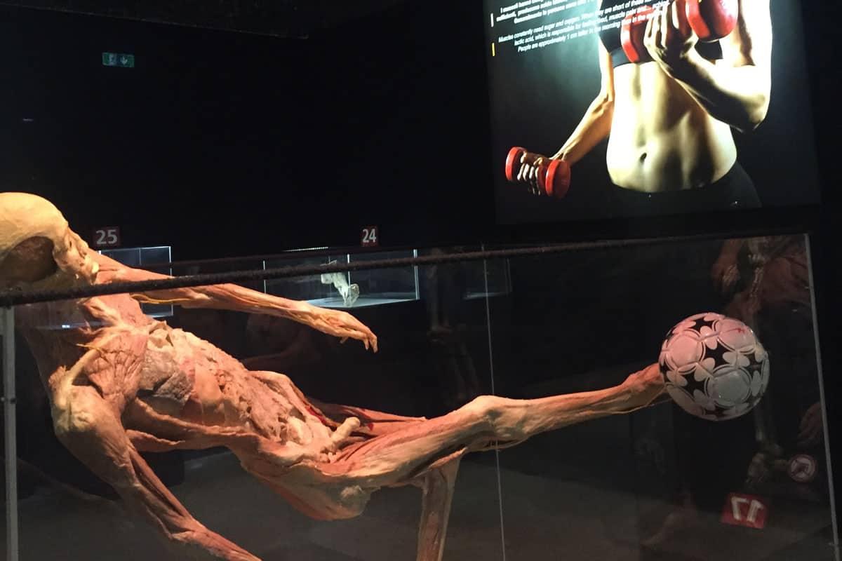 """""""Human Bodies – The Exhibition"""", la mostra internazionale del corpo umano a Città della Scienza"""