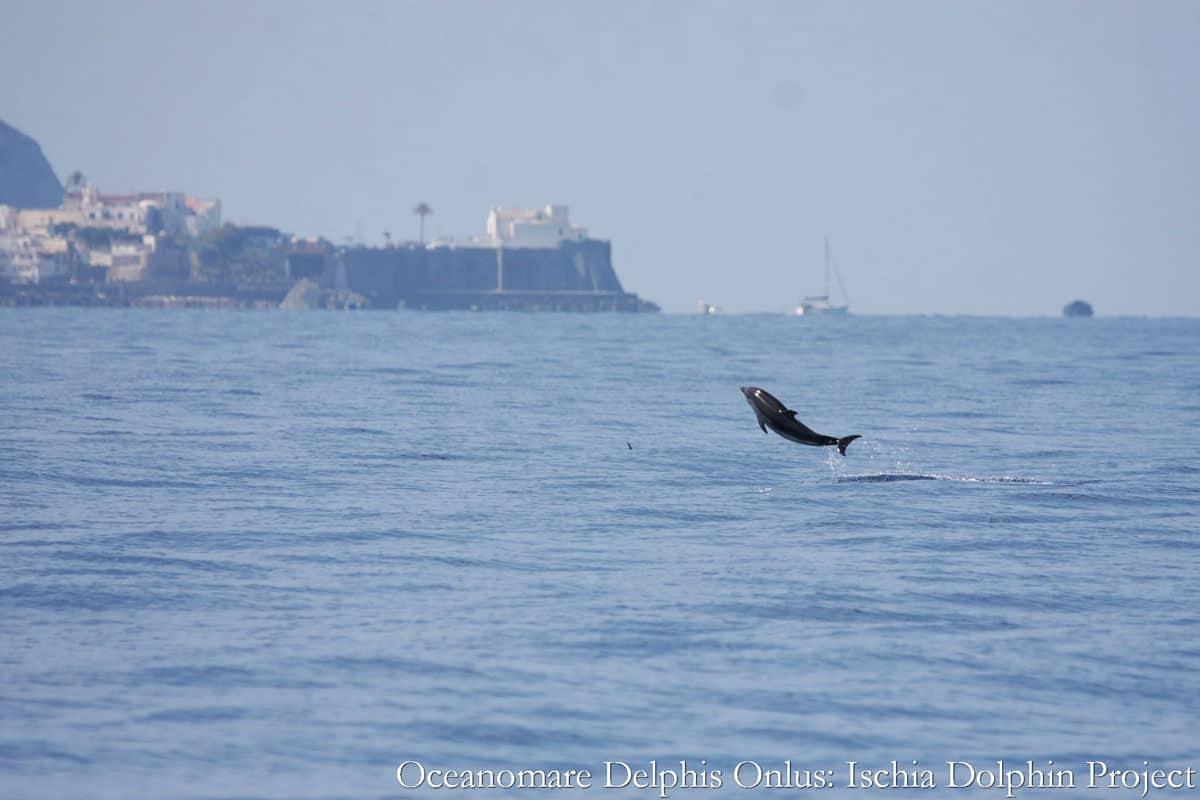 Stenella - Oceanomare Delphis Onlus
