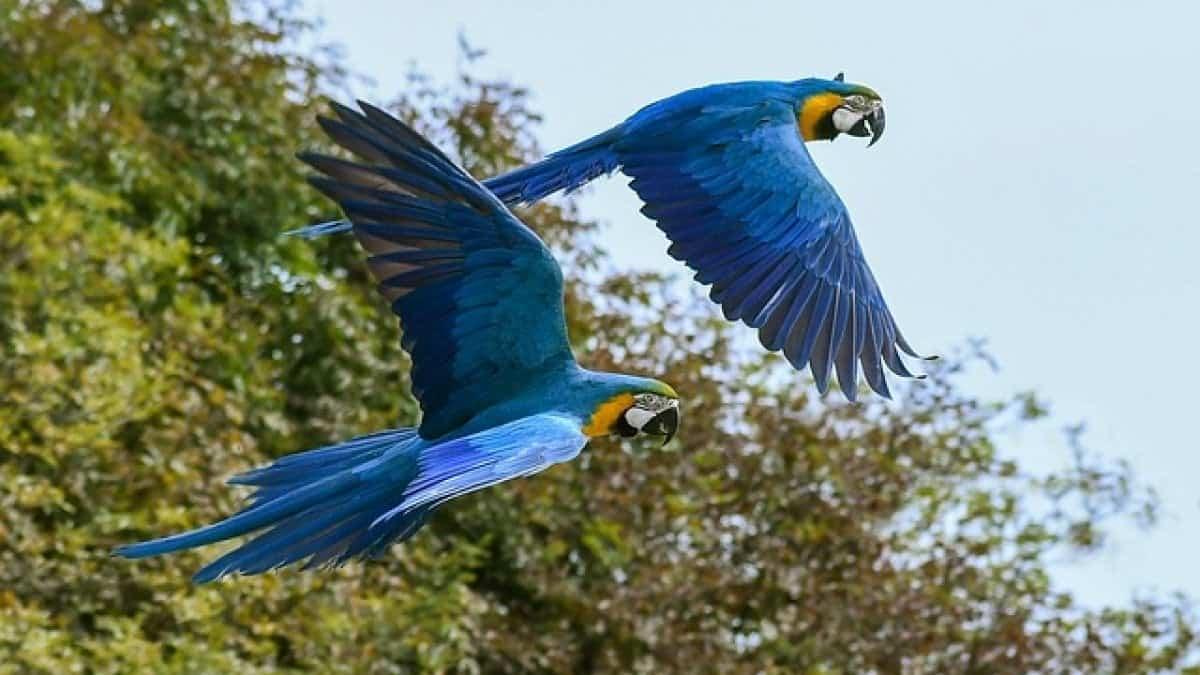 pappagalli informareonline