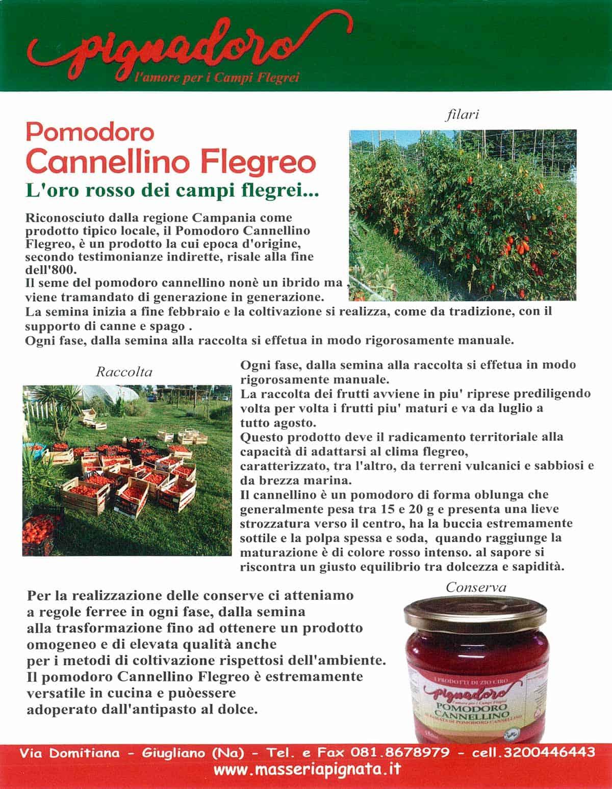 informareonline-pomodorino_cannellino-1
