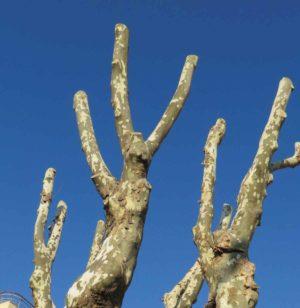 informareonline-alberi-tagliati