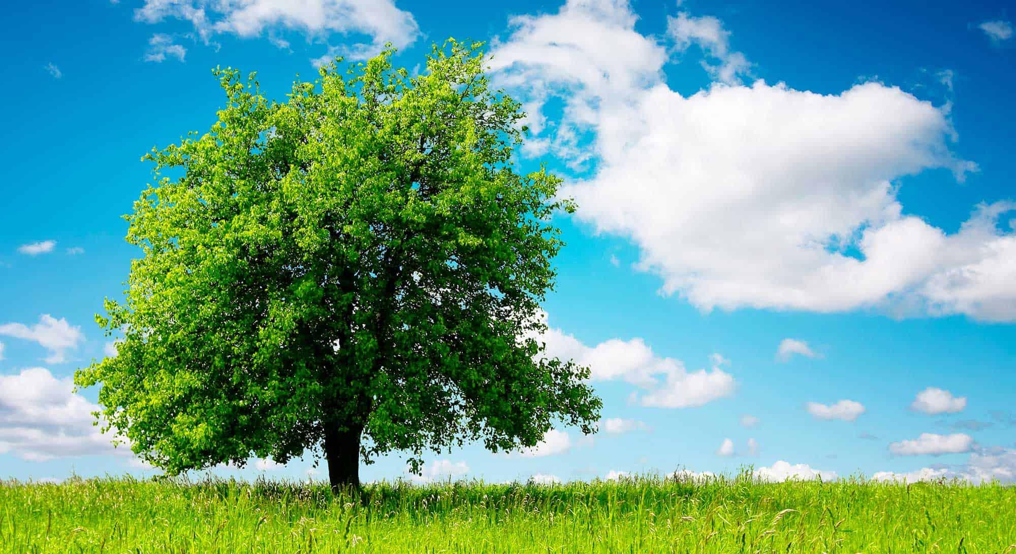 informareonline-alberi