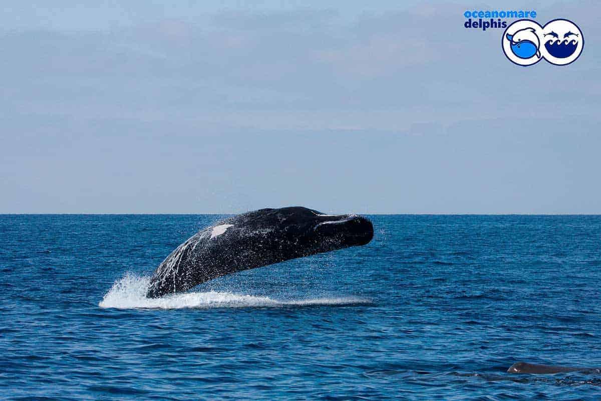 informareonline-ischia-dolphin-project-4