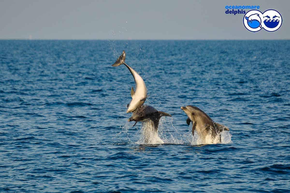 informareonline-ischia-dolphin-project-6