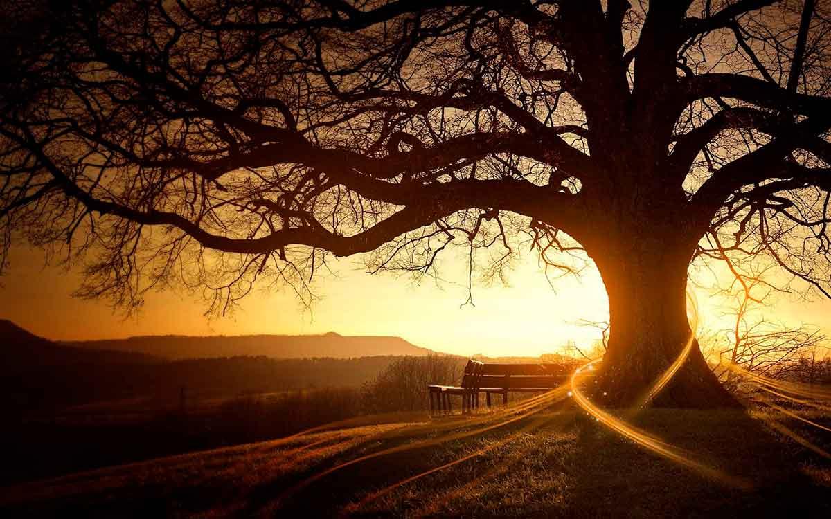informareonline-poesia-il-sentiero-della-vita