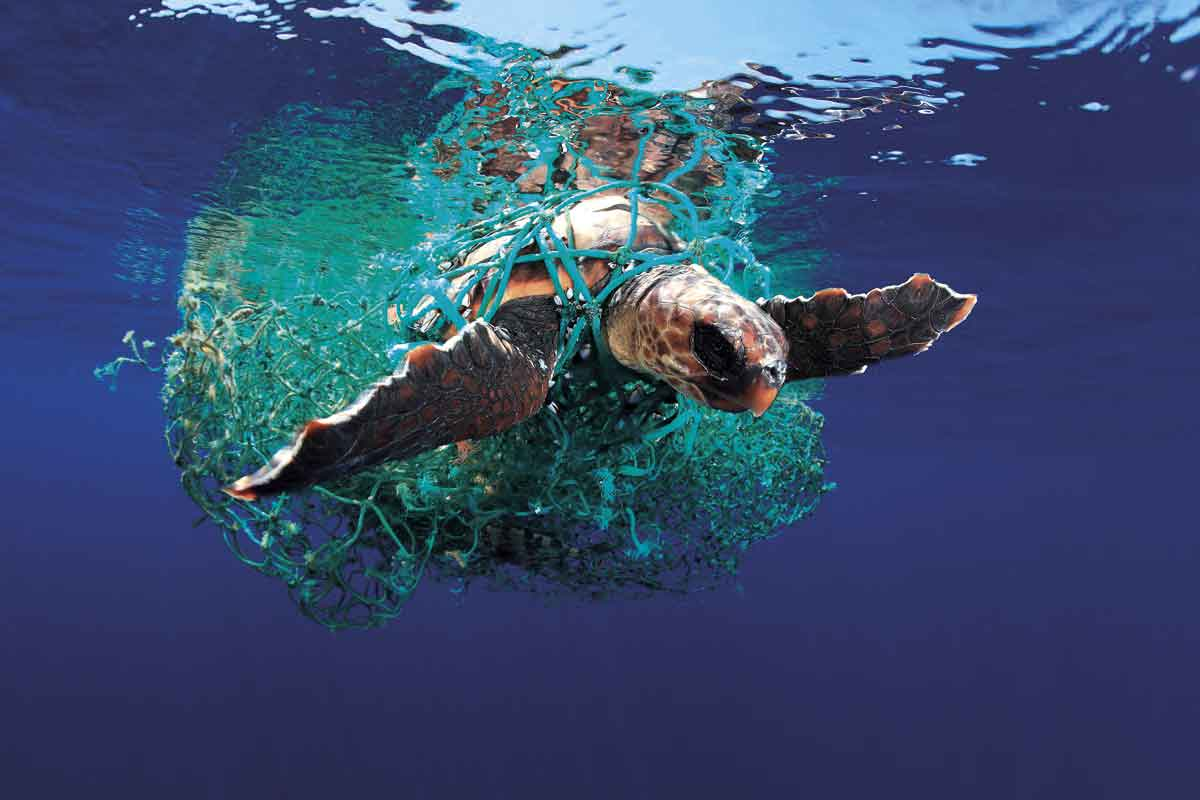 informareonline-plastica-tartaruga-2
