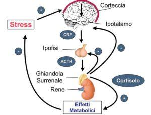 informareonline-stress-da-rientro