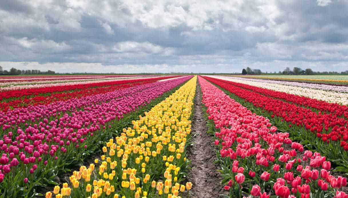 Informareonline-fiori-profumo-opaco.jpg