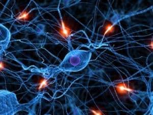 informare_online_sinapsi