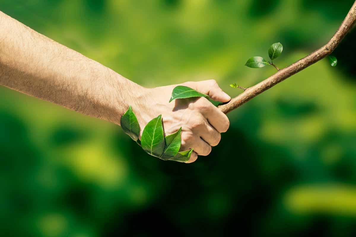 Natura E Il Suo Impatto Sul Benessere Dell Uomo Informareonline Com