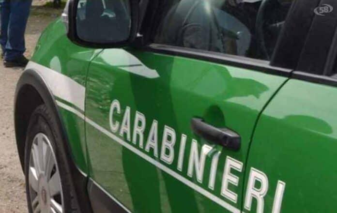 informareonline-carabinieri-forestali-ridott