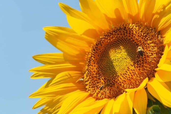 informareonline-giornata-mondiale4-delle-api