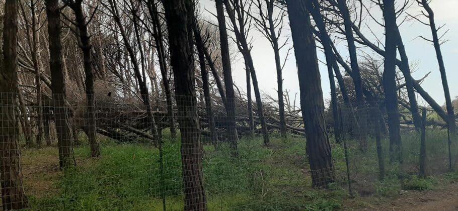 informareonline-alberi-caduti