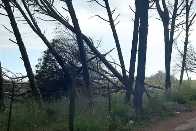 informareonline-ente-riserva-alberi