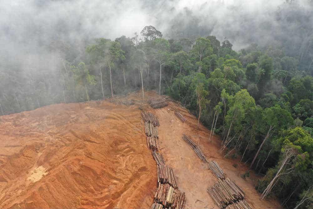 informare_magazine_zoonosi_deforestazione