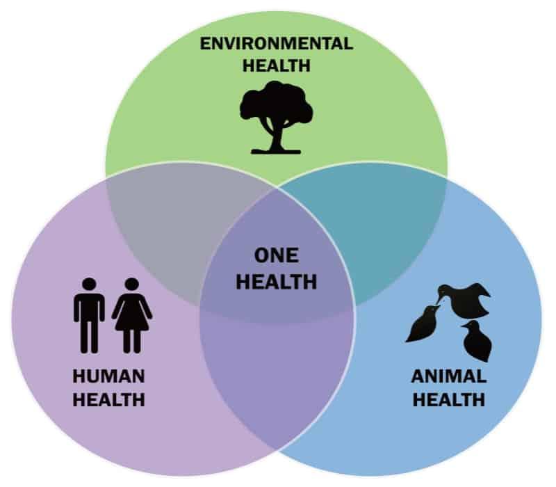 informare_magazine_zoonosi_health