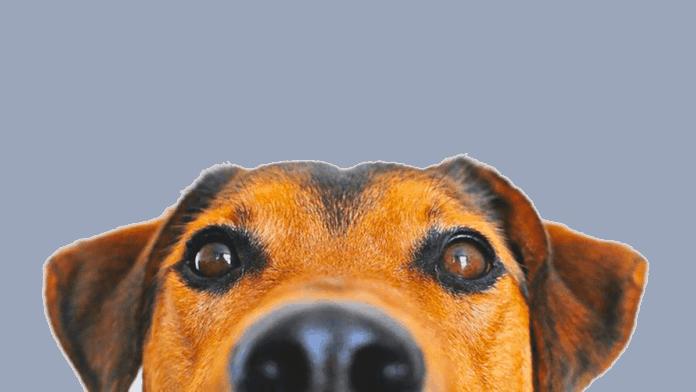 Informareonline-animali-min