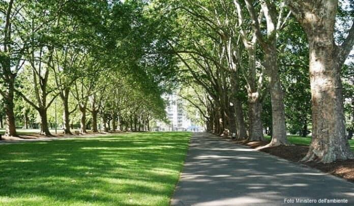 informareonline-riforestazione-urbana-min