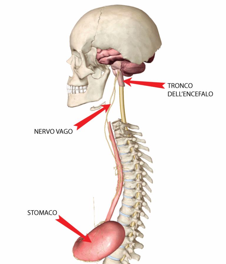Informareonline-nervo-vago