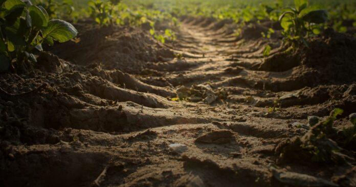 Informareonline-ambiente-il-suolo-e-vita-e-va-preservato